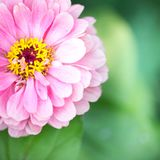 Green postcard with pink flower. Photo for you Royalty Free Stock Image