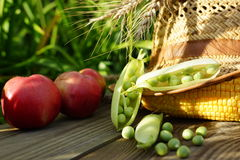 Green pot, corn, onions, apple  and straw hat. Stock Image