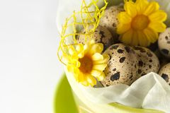 Green easter pot with flowers and partridge eggs. Green pot with decorations and partridge eggs Stock Photo