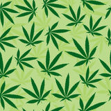 Green Pot Leaf Background