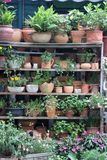 Green pot plants Stock Photos