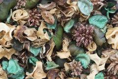 Green Pot Pourri Stock Images