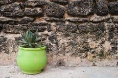 Green pot and tree at Mazagan Fortress wall, El-Jadida Royalty Free Stock Images