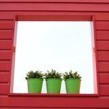 Green pots Stock Photo