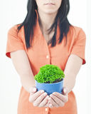A green potted. Plant held in a pair of protective hands Stock Image