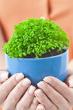 A green potted Stock Photography