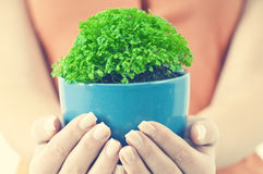 A green potted Stock Photos