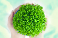 Green potted plant Stock Photos
