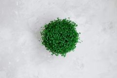 Green potted plant on gray textured background stock photos