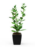 Green potted plant Stock Image