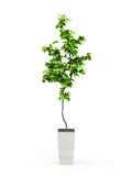 Green potted plant Stock Photography