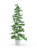 Green potted plant Royalty Free Stock Photos