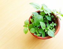 Green potted plant in sunlight Royalty Free Stock Photos