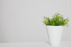 Green Potted Plant on Table with Copy Space. Still Life of Green Potted Plant in White Planter on Table with Copy Space Stock Photo