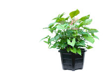 Green potted plant, trees in the coconut shell isolated on white stock photos