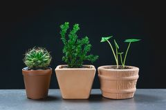 Green potted plant, trees in the pot on table Stock Photo