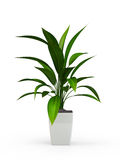 Green potted plant. On white background. 3D Rendering, 3D Illustration Stock Photo
