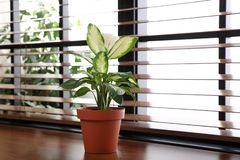 Green potted plant on window sill at home. Space for text royalty free stock images