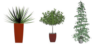 Green potted plants Stock Photos