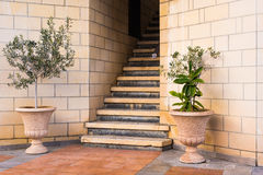 Green potted plants In front of the building entrance. Royalty Free Stock Photos