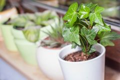 Green potted plants on a window sill. Green leafed indoor potted plants with a bright green plastic watering pot stock photo