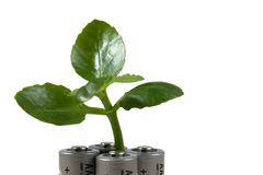 Green power. Green plant growing on four battery cells Stock Photo