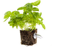 Green power. Source, tap from earth Royalty Free Stock Image