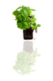 Green power. Green plant with tap isolated on white Royalty Free Stock Photos