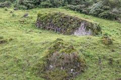 Green praire at Peñas Blancas Massif natural reserve, Nicaragua royalty free stock image