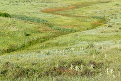 Green prairie at Rocky Mountains foothills Stock Photos