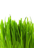 Green pratal grass royalty free stock photography