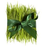 Green present Royalty Free Stock Photography