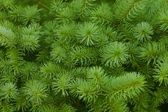 Green prickly branches Royalty Free Stock Photos