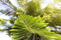 Green prickly branches of a fur-tree or pine Stock Photography