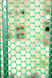 Green protective steel mesh Stock Photo
