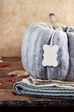 Green Pumpkin with Blank Tag Royalty Free Stock Photo