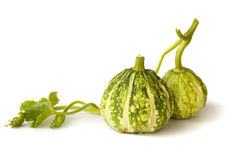 Green pumpkin fruit Stock Image