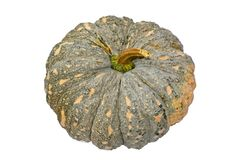 Green pumpkin fruit. On white background Royalty Free Stock Images