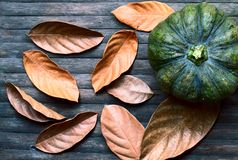 Green pumpkin and golden leaf on wooden background. Autumn harvest banner template. Dry leaf and squash ornament on wooden table. Rustic flat lay with dry leaf Stock Photography