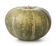 Green pumpkin Royalty Free Stock Image