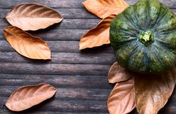 Green pumpkin and orange leaves on wooden background. Autumn harvest banner template. Dry leaf and squash ornament on wooden table. Rustic flat lay with dry Royalty Free Stock Image