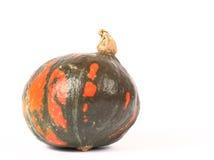 Green pumpkin with orange spots royalty free stock photo