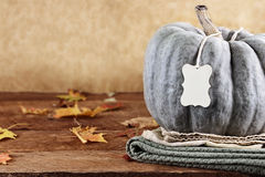 Green Pumpkin with Tag and Copy Space Stock Photos