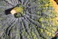Green pumpkin texture Royalty Free Stock Photography