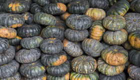 Green pumpkin vegetable of agriculture harvesting Stock Photo
