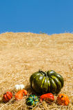 Green pumpkin with vegetables background Royalty Free Stock Photography