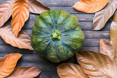 Green pumpkin and yellow leaves on wooden background. Autumn harvest banner template. Golden leaf and squash ornament on wooden table. Rustic flat lay with dry Stock Photography