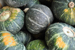Green pumpkins. A lot of green pumpkins on street market Royalty Free Stock Image