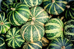 Green pumpkins Royalty Free Stock Photos
