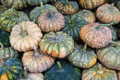Green Pumpkins Stock Images
